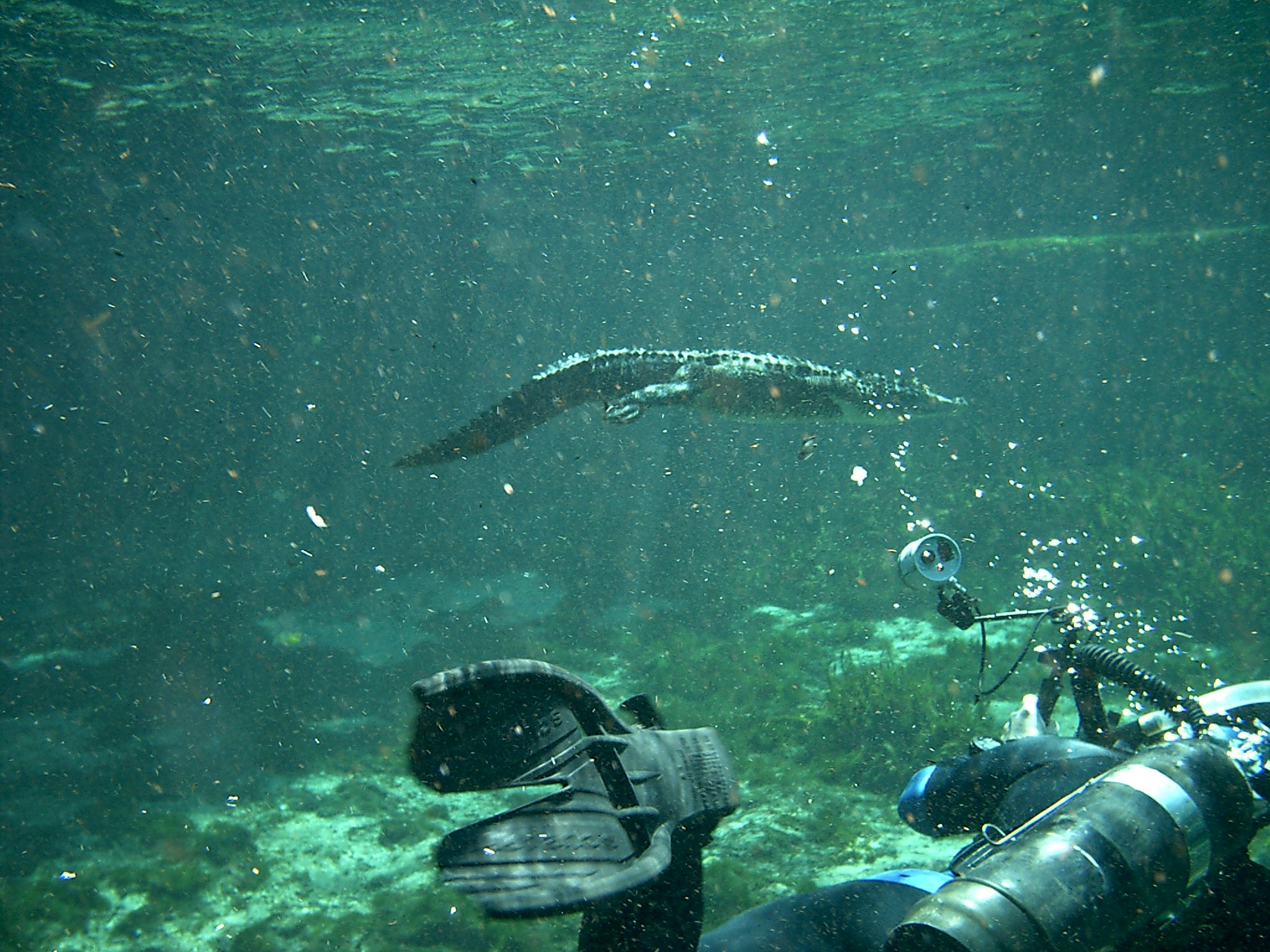 Sand Dog 4 Gator Dive